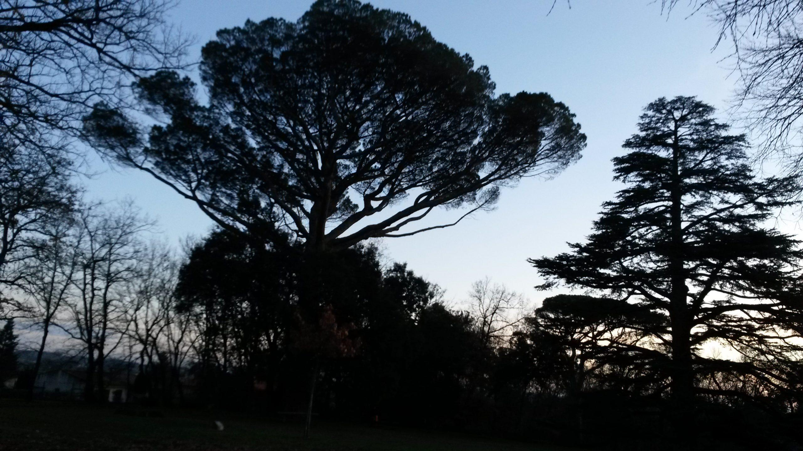 arbres majestueux